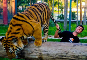 BEST JOB EVER: Tiger Training in Thailand