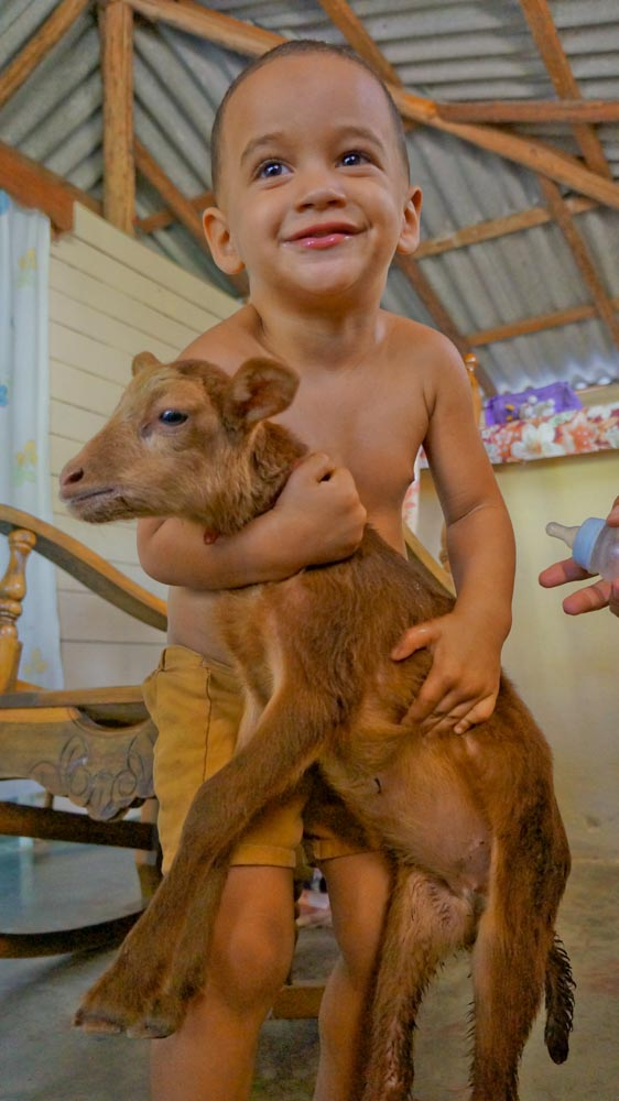 cuban child and goat