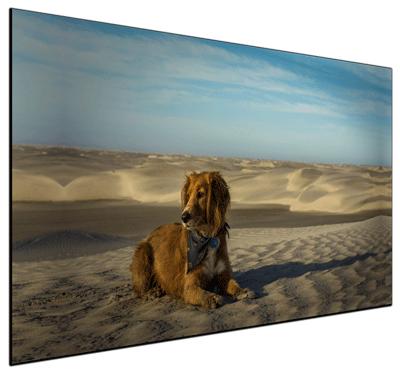 Desert Dog - Print