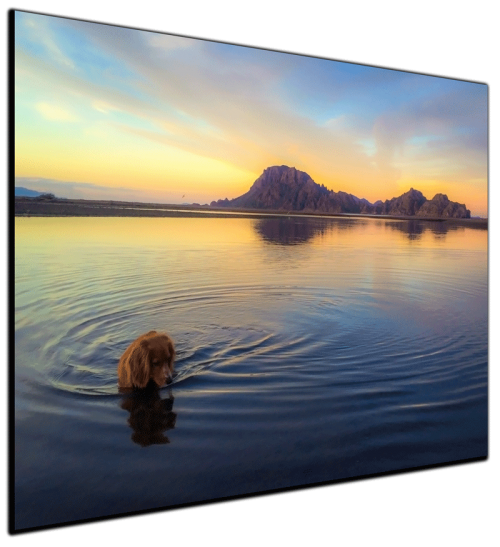 Mexican Dream Reflections Dog -Canvas Print