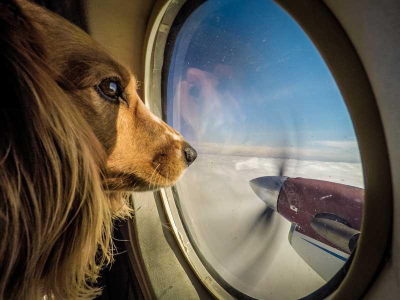 First Flight - Window Seat