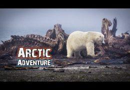 Alaska Arctic Adventure