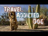 Hasta Alaska – World's Greatest Dog – S04E02