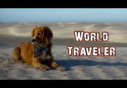 World's Greatest Travel Dog – Hasta Alaska – S04E02