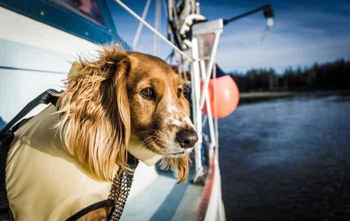 The Last Frontier Hasta Alaska Boat Life