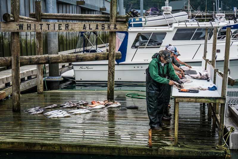 whittier-halibut-fishing-charters-alaska