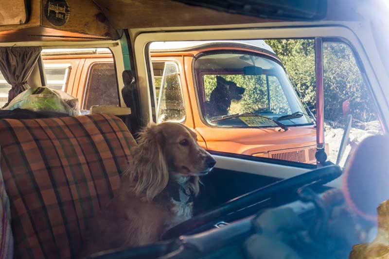 Racing-Driver-Dog