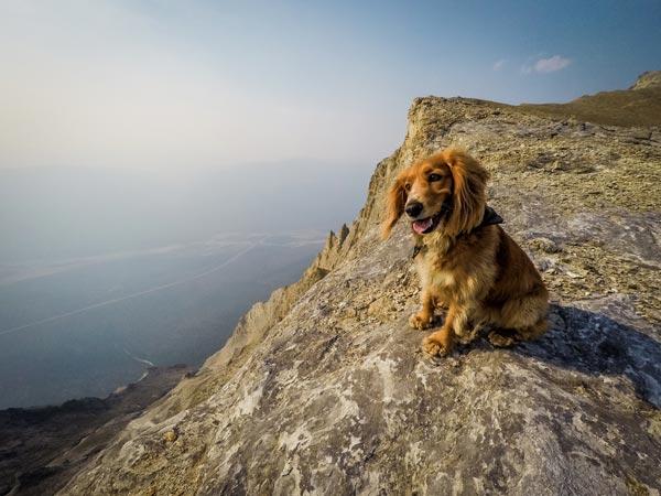Dog Screen Wallpaper